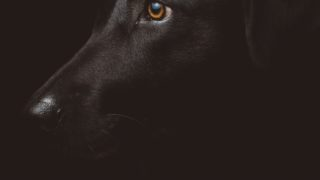 死の猟犬 THE HOUND OF DEATH アガサ・クリスティ 小倉多加志 訳